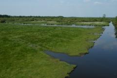 Lac de Grand-Lieu - prairies humides