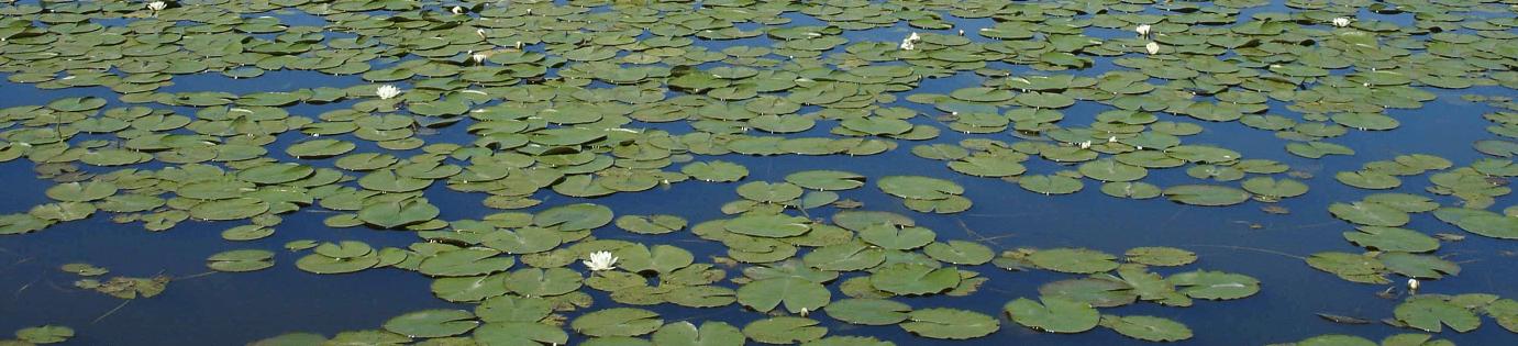Lac de Grand-Lieu