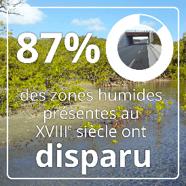disparition des zones humides